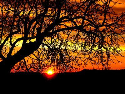 Posta de sol arbre sec