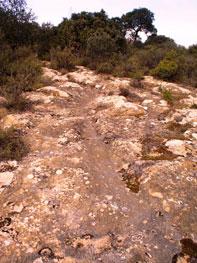Ruta del Camí Ral